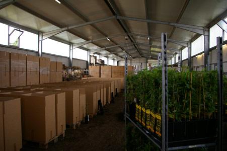 Sichere Verpackung beim Versand von Pflanzen - Verschicken