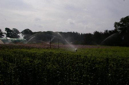 Sichere Verpackung beim Versand von Pflanzen - Anbau der Pflanzen