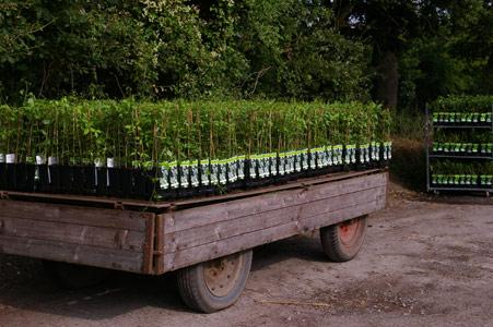 Sichere Verpackung beim Versand von Pflanzen - Transport