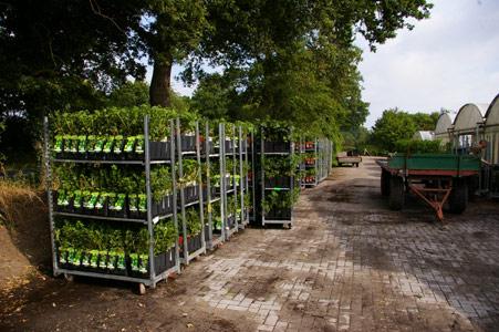 Sichere Verpackung beim Versand von Pflanzen - Aufstellen der Pflanzen