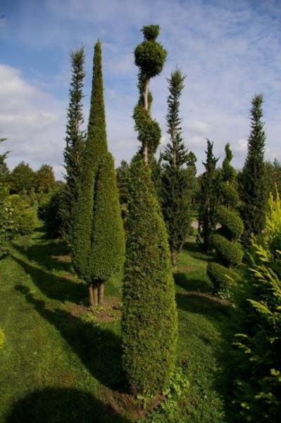 thuja occidentalis smaragd form spirale mit kugel smaragd lebensbaum 300 350. Black Bedroom Furniture Sets. Home Design Ideas